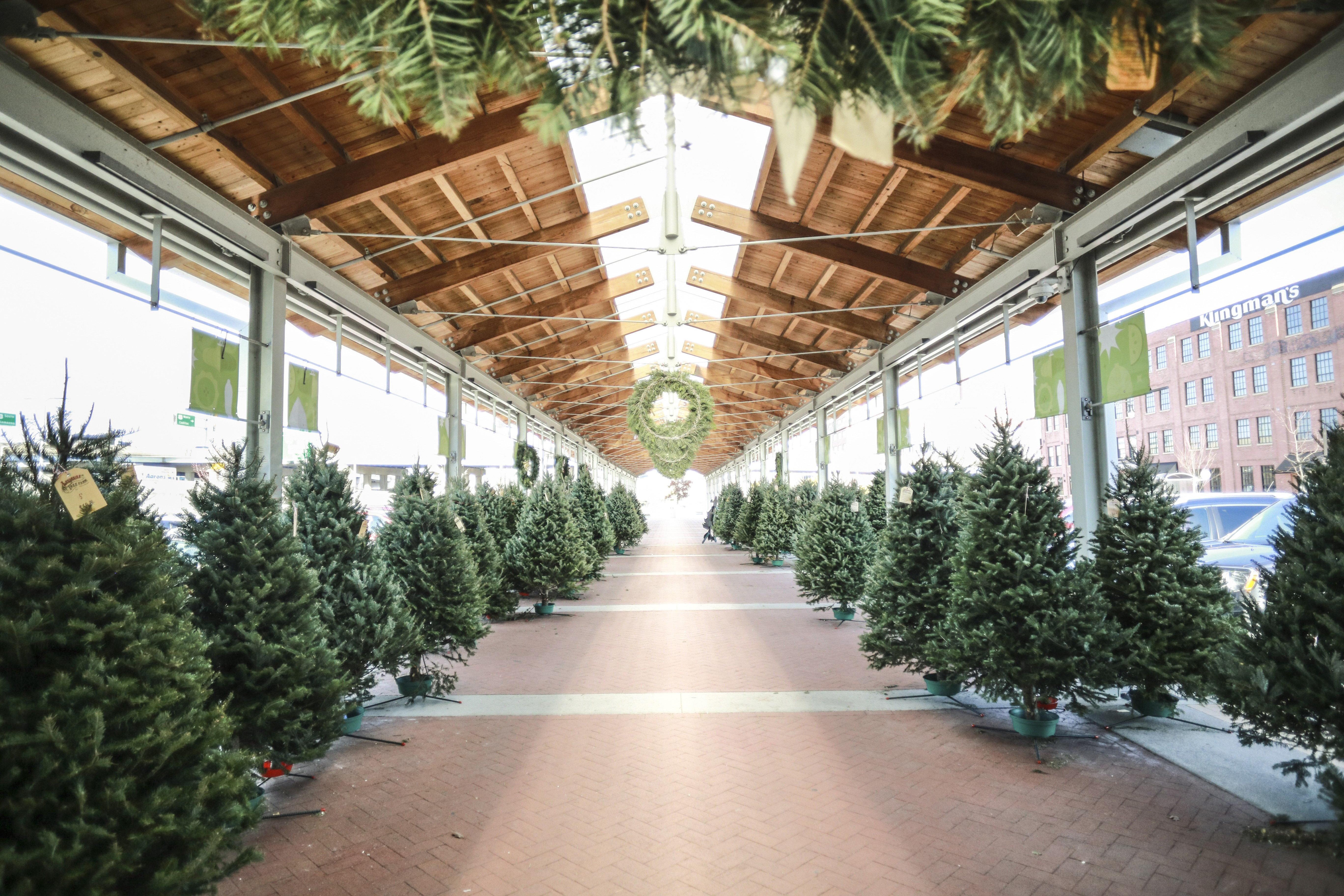 from november 17 december 16 find the perfect holiday wreath or tree for your home at our christmas tree lot hosted by lenderink tree farms